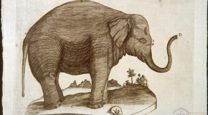 Elefantes, caimanes, vacas y adornos arhuacos: los regalos en la edad moderna